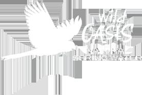 wildoasiswater-logo